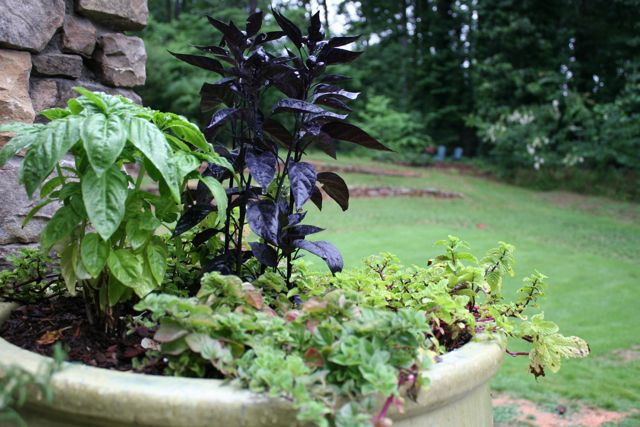 herb container garden | whipstitch