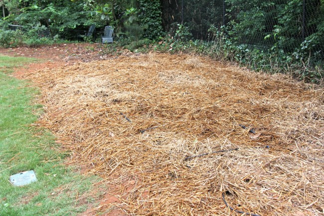 garden bed mulched with straw
